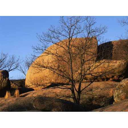 White Oak State Park Halloween (White Oak and boulders, Elephant Rocks State Park, Missouri, USA Print Wall Art By Charles)