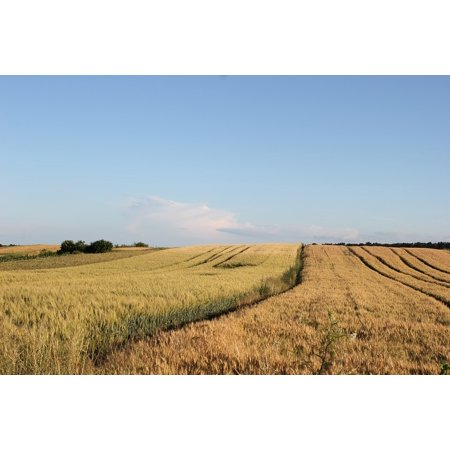 Framed Art for Your Wall Wheat Harvest Field Plant Agriculture 10x13 Frame (Wheat Plant Framed)