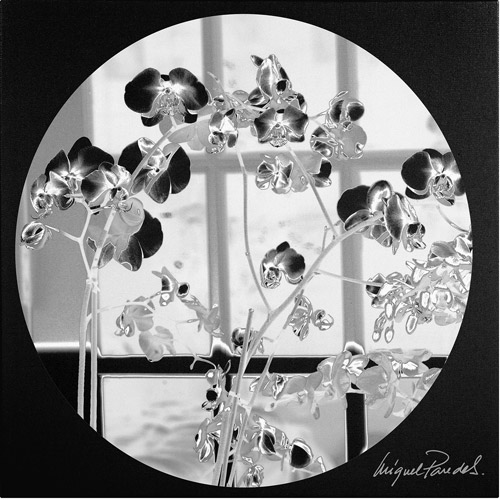 "Trademark Fine Art ""Black Orchids"" Canvas Art by Miguel Paredes"