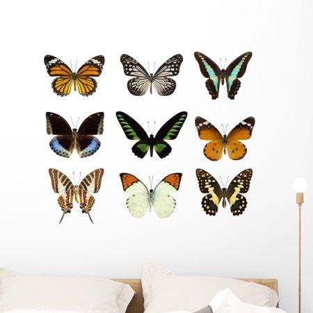 Nine Photographic Butterflies Wall Decal Sticker Set Wallmonkeys Indiv