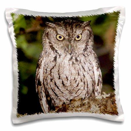 3dRose Eastern Screech-Owl, Texas Oak, Hill Country, TX - NA02 RNU0109 - Rolf Nussbaumer, Pillow Case, 16 by 16-inch ()