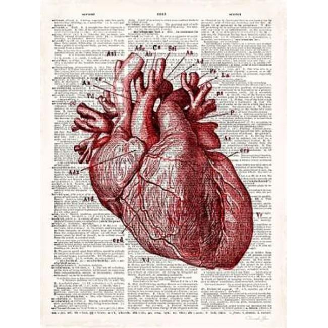 Art In Motion Pdx502jam1219large Vintage Anatomy Heart Poster