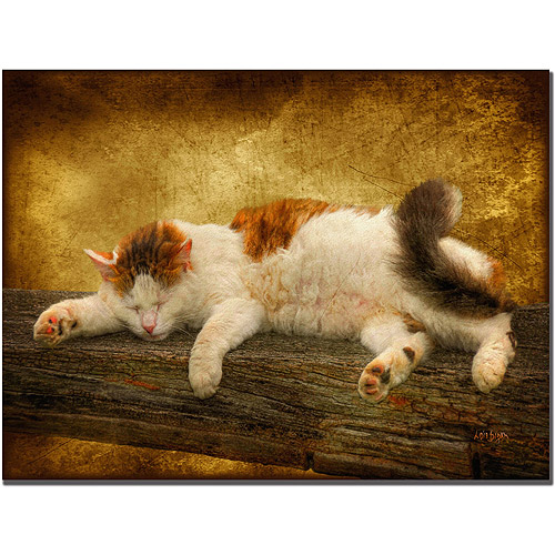 "Trademark Fine Art ""Sleeping Kitty"" Giclee Canvas Art"