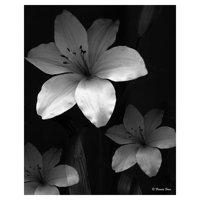 "Masterpiece Art Gallery Lilies Three By Frannie Funn Canvas Art Print 16"" x 20"""