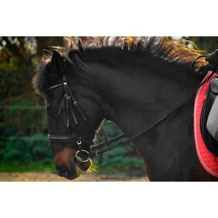 Canvas Print Bridle Ride Trot Teeth Horse Andalusians Spanish Stretched  Canvas 10 x 14