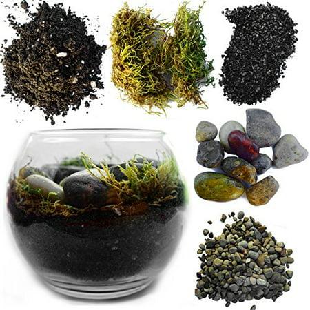 Complete Terrarium Kit Includes Succulent Planter w/ Soil & Glass Globe - 5 Inch