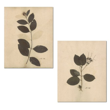 Lovely Vintage-Style Pressed Botanical Leaves Set; Two 11x14in Poster Prints