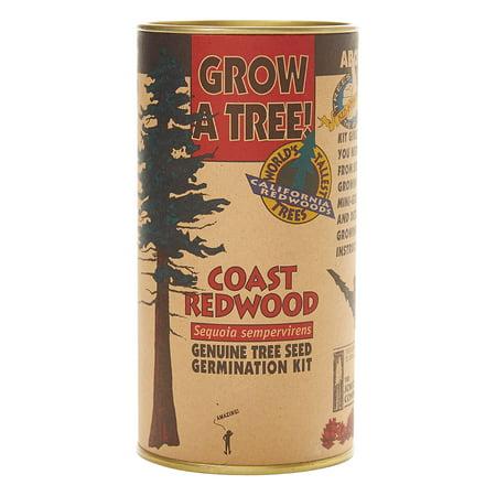 Coast Redwood | Tree Seed Grow Kit | The Jonsteen Company ()