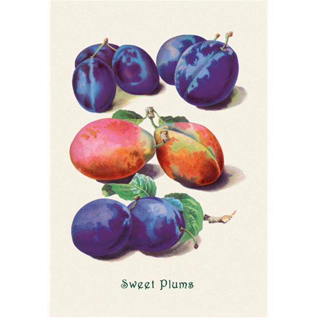 Buy Enlarge 0-587-04170-6P12x18 Sweet Plums- Paper Size P12x18