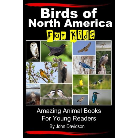 Birds of North America For Kids: Amazing Animal Books for Young Readers - (Names For Groups Of Animals And Birds)