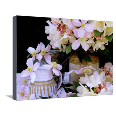 - Rhododendron Yak Hybrid Golden Torch