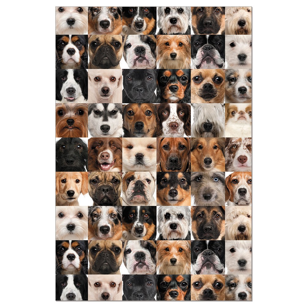 Tree-Free Greetings Dog Collage Boxed ECOnotes Blank Note Cards-FS56354