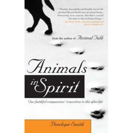 Animals In Spirit  Our Faithful Companions Transition To The Afterlife