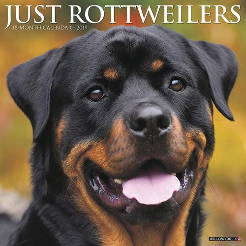 Willow Creek Press 2019 Just Rottweilers Wall Calendar