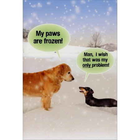 B5953 My Paws Are Frozen Christmas\' Box Set of 12 Humorous Merry ...