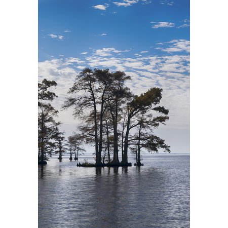 LAMINATED POSTER Blue Trees In Water Sky North Carolina Poster Print 24 x 36