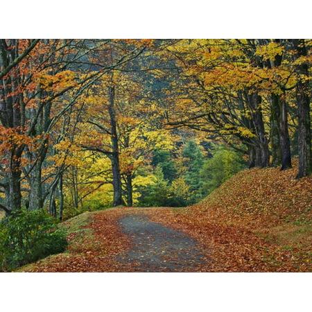 Walking Trail around Bass Lake in the Autumn, Blowing Rock, North Carolina, USA Print Wall Art By Adam Jones (North Carolina Blowing Rock)