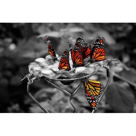 Butterflies at the Bronx Zoo NYC Print Wall Art