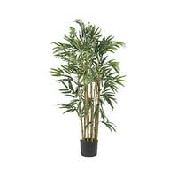 Multi Bambusa Bamboo Silk Tree - 3 Feet Tall