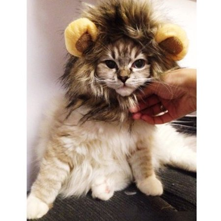 Pet Costume Lion Mane Wig for Dog Cat Halloween Dress up with Ears pet toys by Atlantic for $<!---->