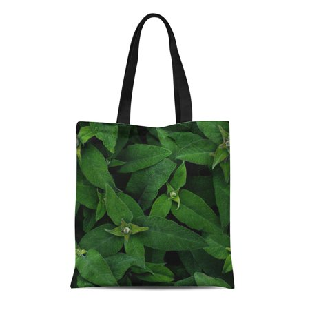 LADDKE Canvas Bag Resuable Tote Grocery Shopping Bags Agriculture Green Big Sage Leaves Aroma Aromatherapy Aromatic Botanical Garden Tote Bag