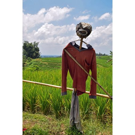 Framed Art for Your Wall Rice Fields Scarecrow Bali Travel Indonesia 10x13 Frame - Scarecrows For Sale