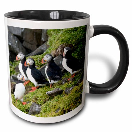 3dRose Norway, Svalbard, Spitsbergen. Atlantic puffins perched on a cliff. - Two Tone Black Mug, (Atlantic Puffins Perch)