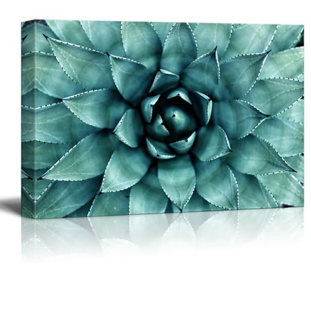 Tell Gallery - wall26 - Closeup Teal Succulent Plant Gallery - Canvas Art Wall Decor - 12