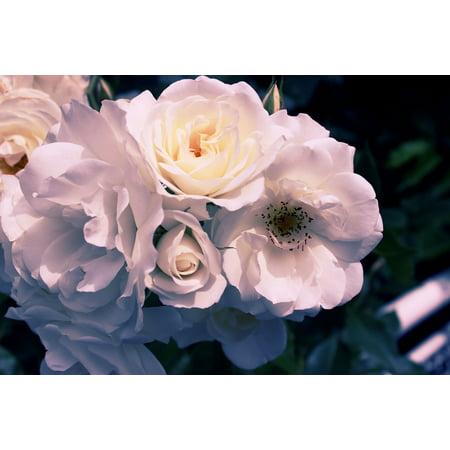 LAMINATED POSTER Floral Flower Nature Leaf Blossom Plant Bloom Poster Print 24 x 36