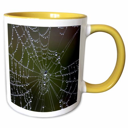 3dRose Spider a web with dew drops - Georgia, Savannah - Two Tone Yellow Mug, 11-ounce (Dropping Spider)