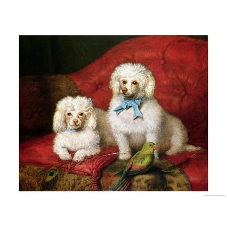 A Pair of Poodles Print Wall Art ()