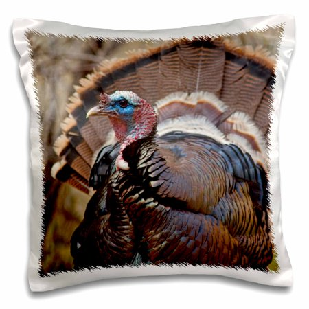 3dRose Tom turkey wildlife, Zion National Park in Utah - US45 CHA0265 - Chuck Haney - Pillow Case, 16 by 16-inch