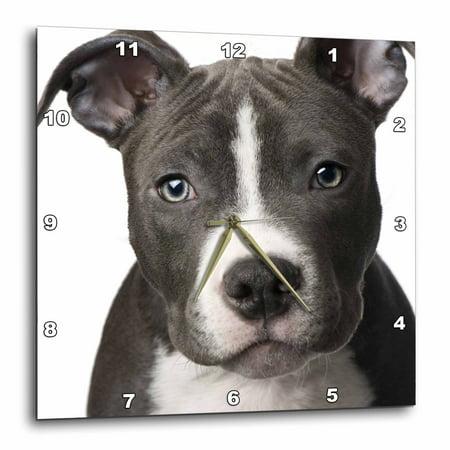 Bulls Desk Clock - 3dRose American Pit Bull Terrier Puppy, Wall Clock, 13 by 13-inch