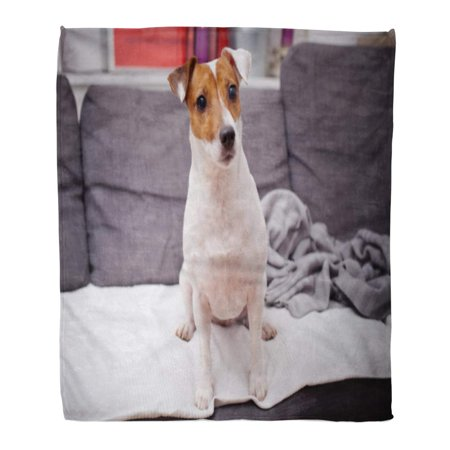 ASHLEIGH Flannel Throw Blanket Brown Canine Jack Russell Terrier Dog Cute Doggy Soft for Bed Sofa and Couch 50x60 -