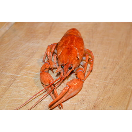 Shell Appetizer - LAMINATED POSTER Boiled Beer Boiled Lobster Appetizer Cancer Poster Print 24 x 36