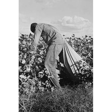 These pickers are paid seventy-five cents per hundred pounds of picked cotton Strikers organizing under CIO union are demanding one dollar A good male picker in good cotton under favorable weather con (Cheap Stuffs Under 1 Dollar)
