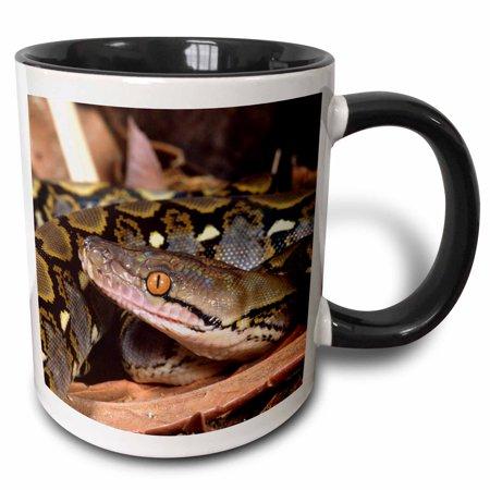 3dRose Reticulated Python snake - NA02 DNO0481 - David Northcott, Two Tone Black Mug, 11oz