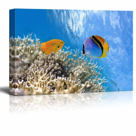 Wall26 - Canvas Prints Wall Art - Tropical Fish on Coral Reef in the Red Sea | Modern Wall Decor/ Home Decoration Stretched Gallery Canvas Wrap Giclee Print. Ready to Hang - 24