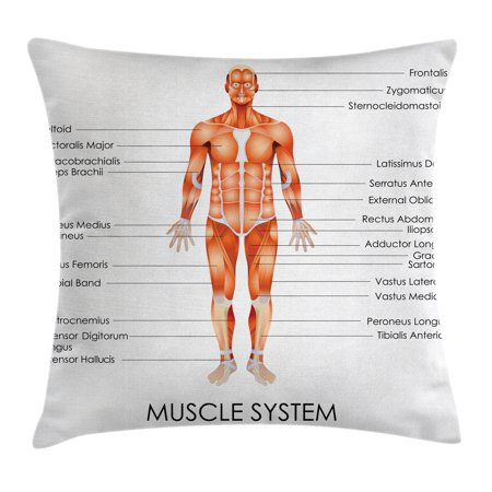 Human Anatomy Throw Pillow Cushion Cover, Muscle System Diagram of Man Body Features Biological Elements Medical Heath Image, Decorative Square Accent Pillow Case, 16 X 16 Inches, Coral, by (Coral Home Accents)