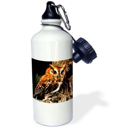 3dRose Owl, Sports Water Bottle, 21oz