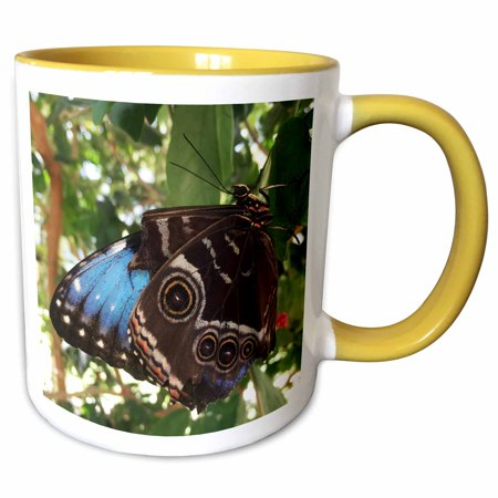 3dRose Blue Monarch Butterfly Relaxing - Two Tone Yellow Mug, 11-ounce](Blue Monarch)