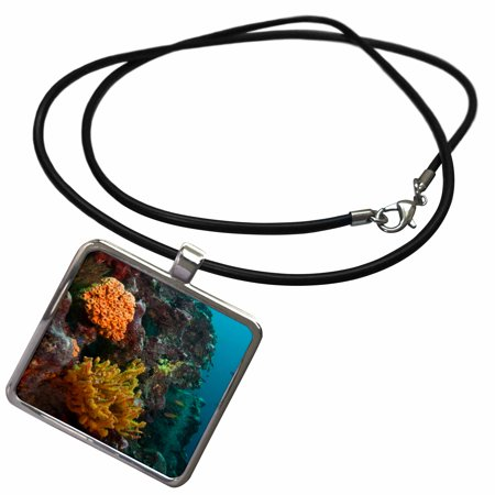 3dRose Marine life, sponges, invertebrate, Galapagos Islands - SA07 POX1547 - Pete Oxford - Necklace with Pendant (ncl_86355_1)