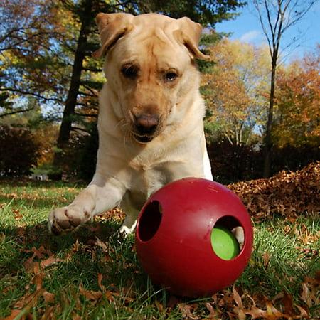 Jolly Pets-Jolly Ball Dog Teaser Ball- Assorted 8 In - Jolly Jabber