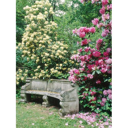 - Curved Stone Bench & Rhododendron Hybrid Pink Pearl