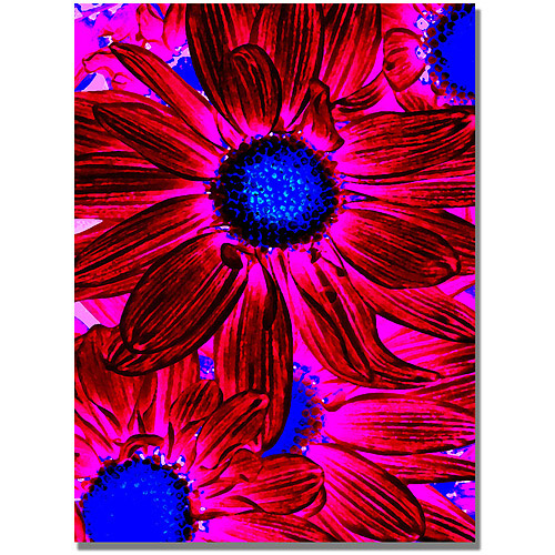 "Trademark Fine Art ""Pop Daisies XI"" Canvas Wall Art by Amy Vangsgard"