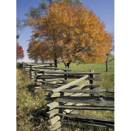 Split Rail Fence and Tree, Hensley Settlement, Cumberland Gap National Historic Park, Kentucky, USA Print Wall Art By Adam Jones