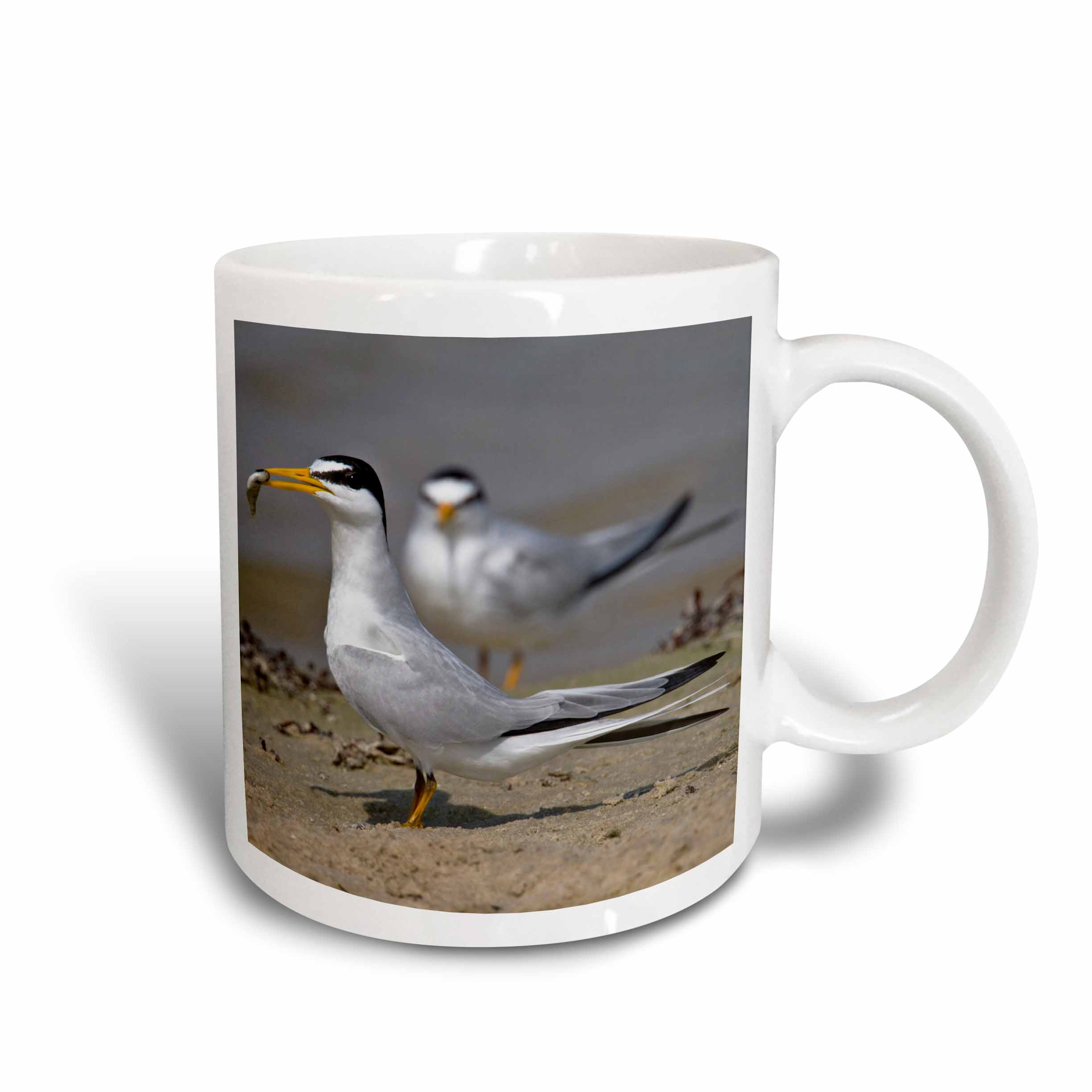 3dRose Least Tern bird with fish, Galveston, Texas, USA US44 LDI0579 Larry Ditto, Ceramic Mug, 11-ounce by 3dRose
