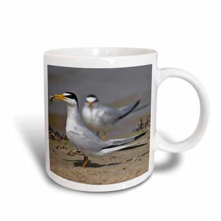 3dRose Least Tern bird with fish, Galveston, Texas, USA - US44 LDI0579 - Larry Ditto, Ceramic Mug,