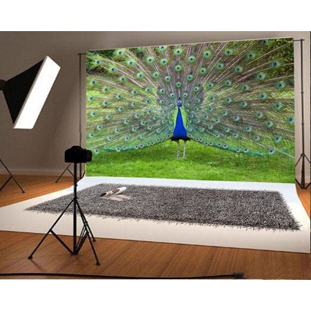 HelloDecor Polyster 7x5ft Backdrop Photography Background Peacock Photo Backdrops Green Feather Showed Green Grassland Field Outdoors Scenery Peacock Background Grunge Animal Zoo TV or Video Shoot (Zoo Background)