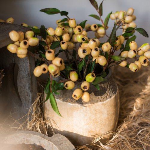 Charlton Home Loquat Fruit Stem